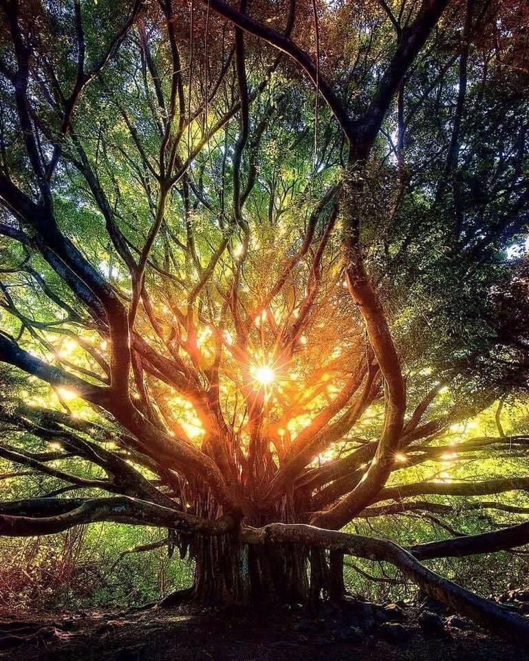 arbre-energies